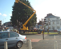 Tree surgeon using a Cherry Picker to work on a large tree