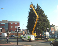 Tree surgeon using a Cherry Picker to work on the top of a large tree
